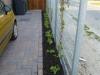 beplanting-bij-stalen-hek