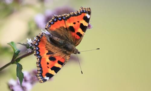 vlinders - kopie
